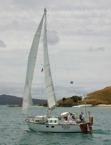 Velella-Sailing